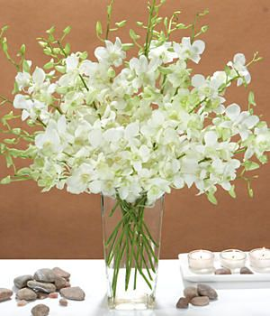 White Dendrobium Orchids.
