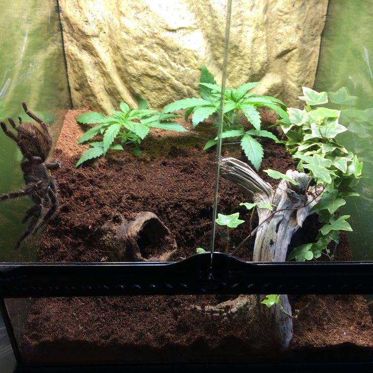 how to make a crested gecko terrarium