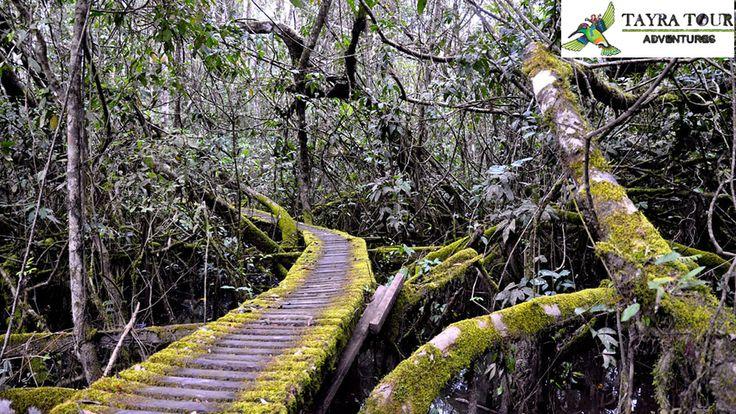 La Reserva Nacional Tambopata es un área natural protegida del Perú, ubicada en el departamento de Madre de Dios, provincia de Tambopata y se extiende en los distritos de Tambopata e Inambari, con la finalidad de usar sosteniblemente los recursos como los castañales y el paisaje para la recreación y tercero contribuir al desarrollo sostenible de la región y del país, a partir del conocimiento de la diversidad biológica y del manejo de los diversos recursos naturales renovables.
