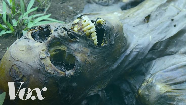 The Freeman Ranch in San Marcos , Texas is home to fields of dead human bodies. Here's why.