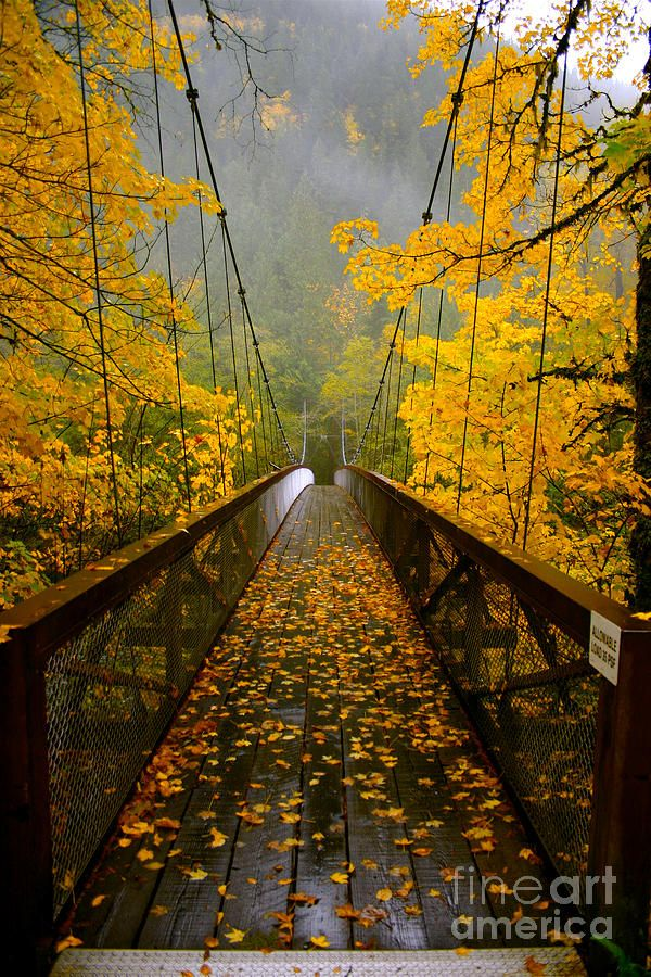 Autumn Bridge Crossing Photograph by NW Images - Autumn Bridge Crossing Fine Art Prints and Posters for Sale