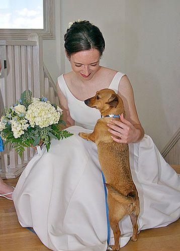 Pet-Friendly Weddings In The News