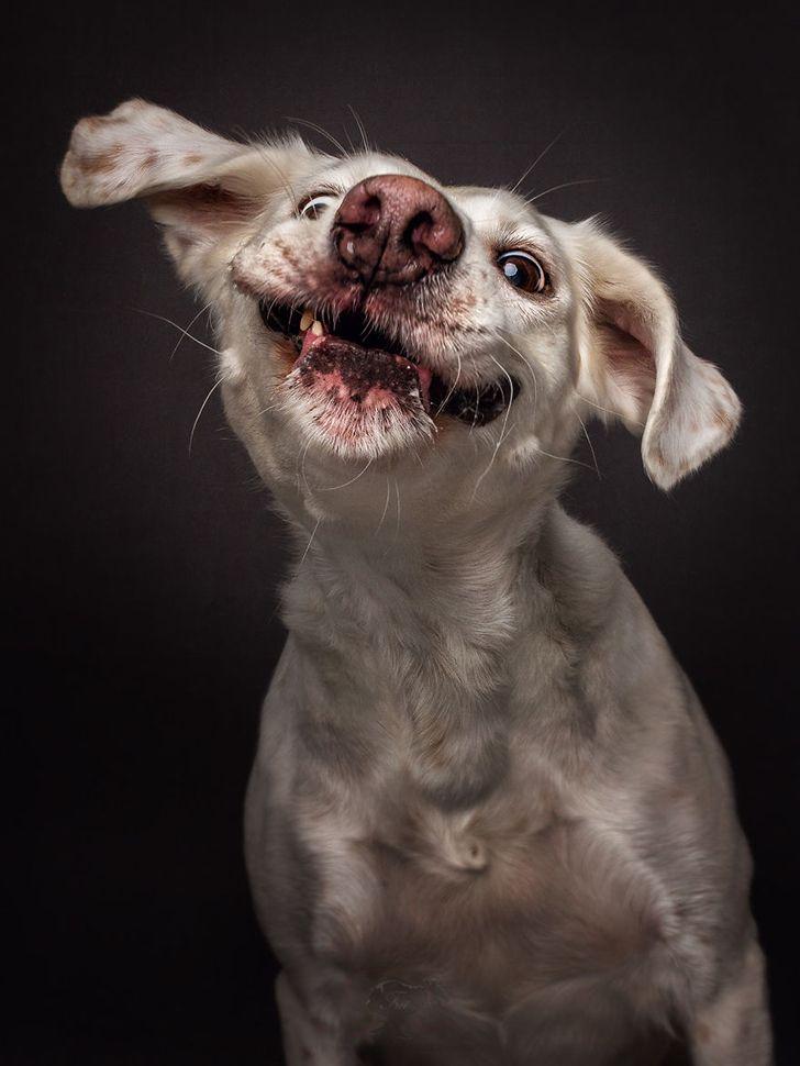 Мужчине открытки, смешные собаки только картинки