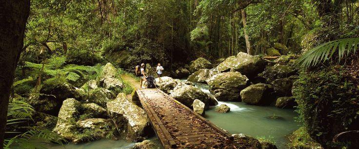 Walks and Waterfalls on the Sunshine Coast http://coolumbeachaccommodation.com.au/sunshine-coast-attractions/walks-and-waterfalls-on-the-sunshine-coast