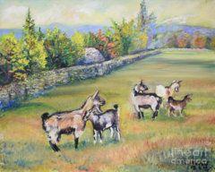 Raija Merila Painting - Croatian Goats by Raija Merila