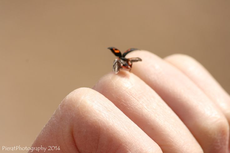 ladybird flying hand nature photography insect