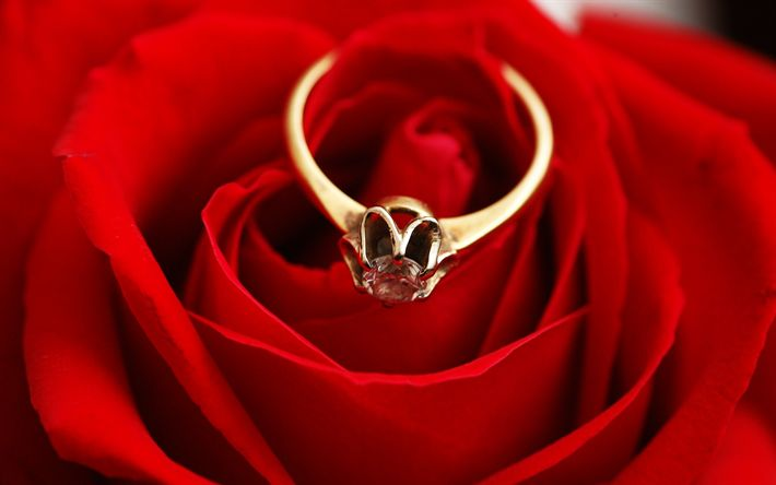 Download wallpapers red rose, engagement ring, gold rings, rosebud, marriage proposal