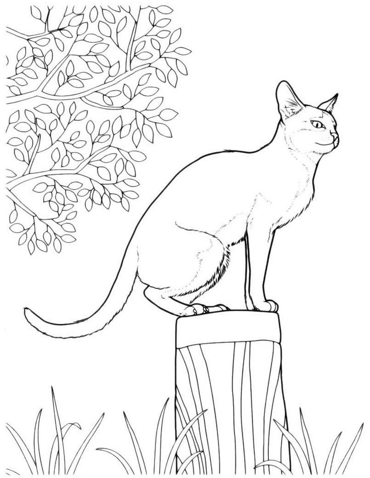 кошка раскраска | Кошачий эскиз, Наброски, Эскиз