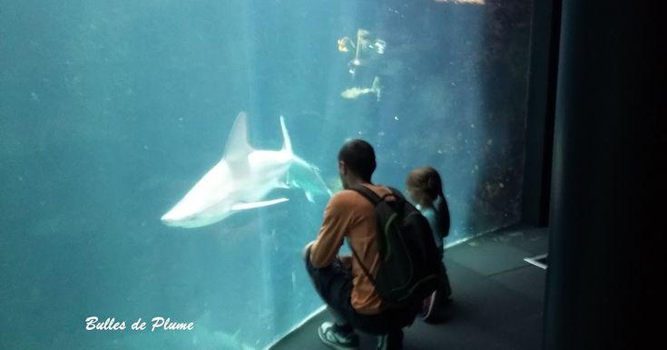 #nausicaa #aquarium #sortieenfamille #découverte