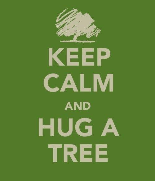 keep calm and hug a tree!!!!