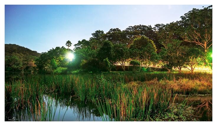 Night Wading Through the Reeds by mdomaradzki.deviantart.com on @deviantART