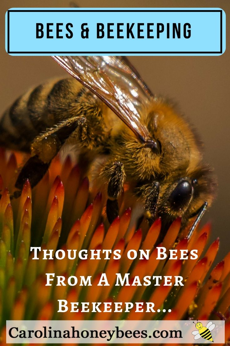 98 best apicultura images on pinterest honey bees bee keeping