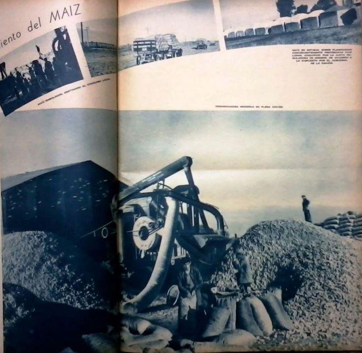 Imagen sobre el Desgrane y almacenamiento de maíz. Del lado derecho se observa:  maíz en estibas, sobre planchadas convenientemente protegidas por lonas, adquirido por la Junta Reguladora de Granos. Fuente: Revista M.A.N. de mayo-junio de 1941