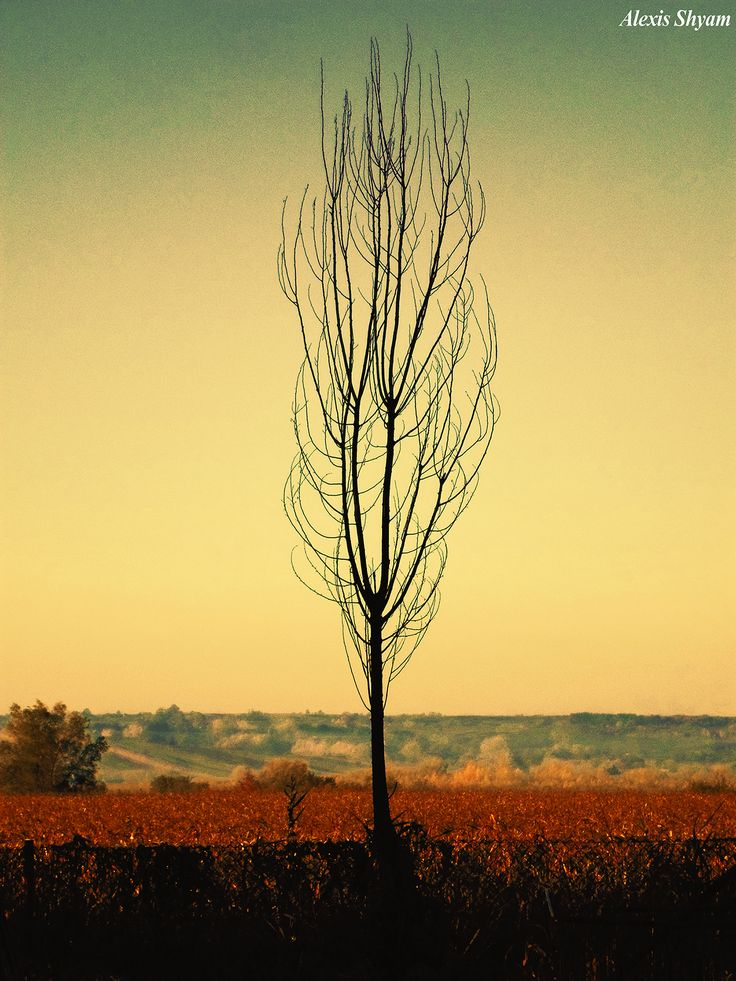 Alexis Shyam - Melancholic Tree