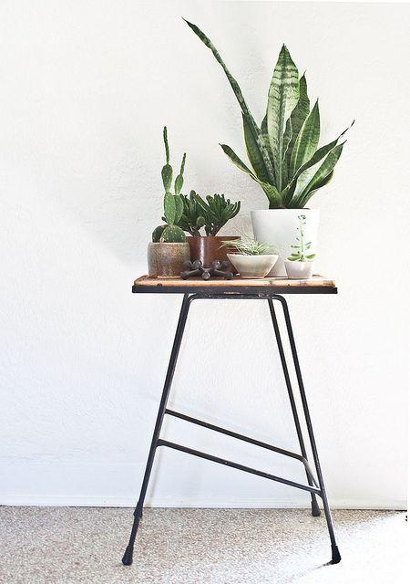Kamerplanten als stilleven op tafeltje of krukje