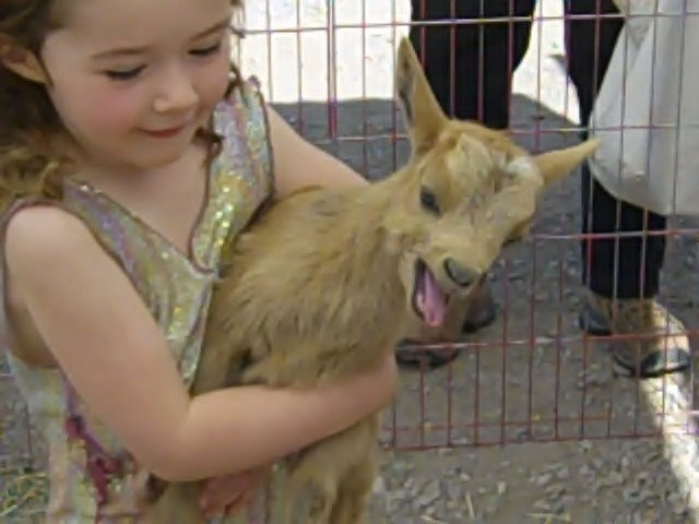 terry's goats at the sedona farmers market...