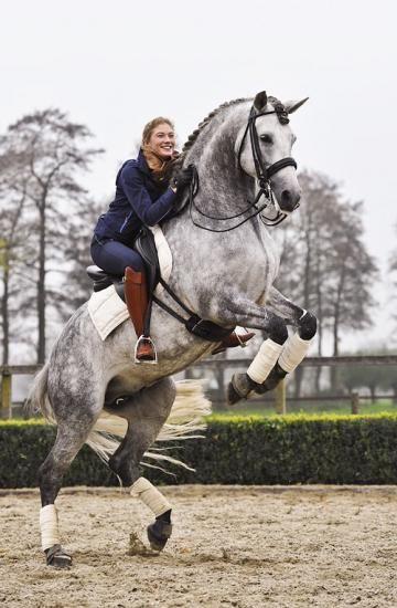 ♥ equestrian athletes