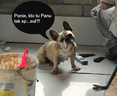 (1) Załoga Bulldoga (@ZalogaBulldoga) | Twitter