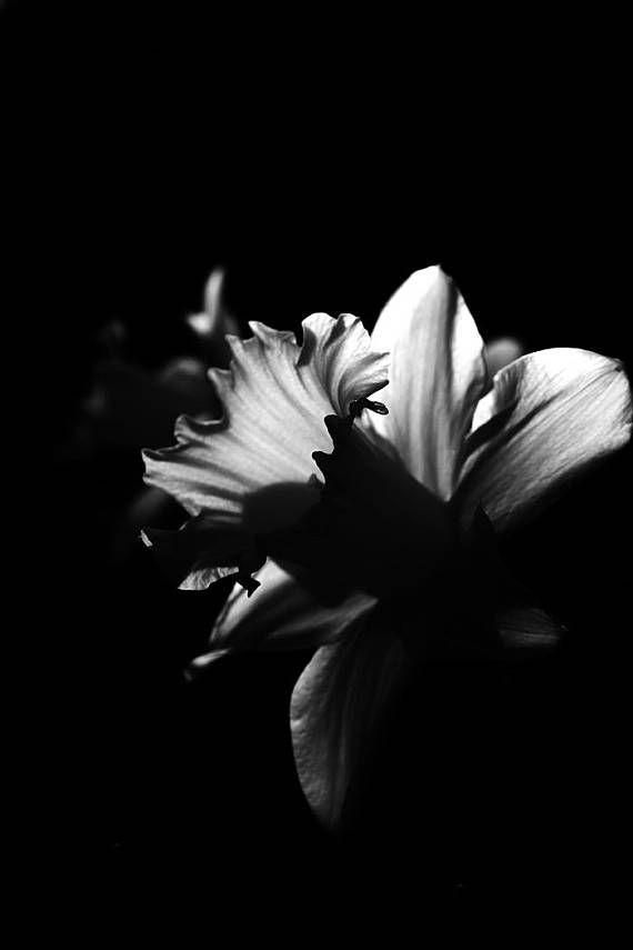Black White Flower Floral Photography Dark Flower Photo Floral Etsy Floral Photography Dark Flowers Floral Poster