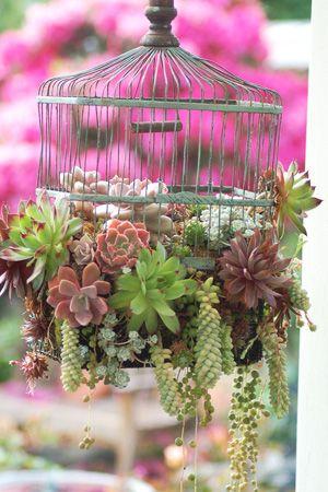 succulent wedding - brides of adelaide magazine - succulent chandelier