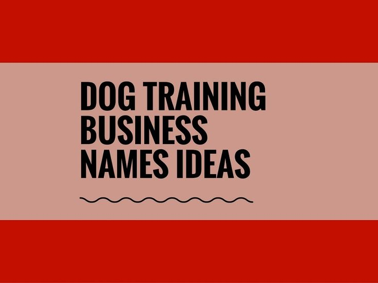 While your business may be extremely professional and important, choosing a creative company name can attract more attention.A Creative name is the most important thing of marketing. Check here creative, best Dog Training Business names ideas for your inspiration.