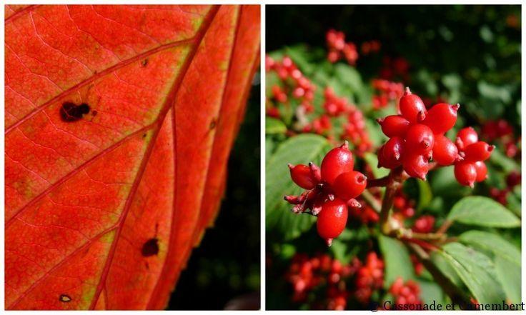 Fin d t jardins du pays d auge plantes et fleurs for Plantes fleurs et jardins