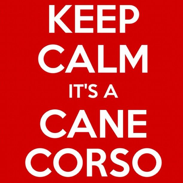 Keep Calm its a Cane corso...well maybe.. Depends on the circumstance