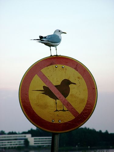 This seagull seems to have its own personal understanding of human's rules.
