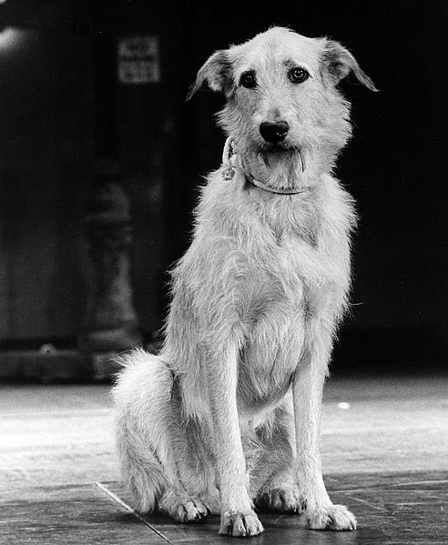 Sandy the dog from Annie, 1977, public domain via Wikimedia Commons.