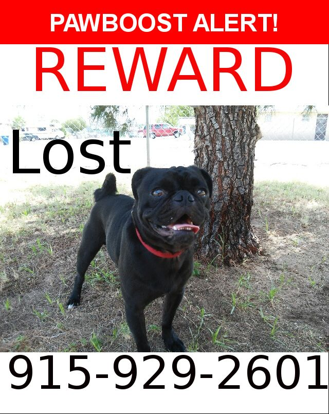 Pin On Lost Pets
