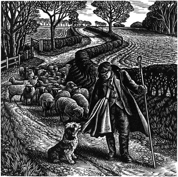 Suffolk Shepherd - Wood Engraving by Howard Phipps