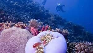 Подводный мир Бали прекрасен и разнообразен