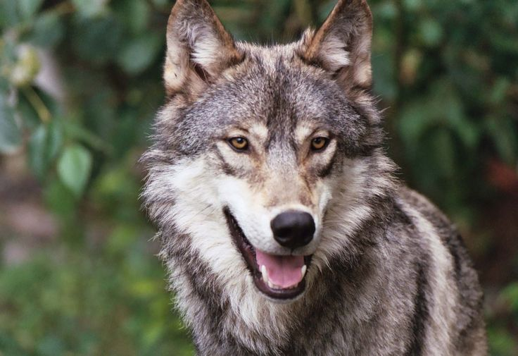 С волками жить, по волчьи выть… » Женский Мир