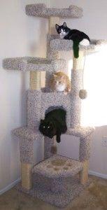 Unique Cat Tree House review at Kaboodle