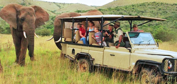 Game drive in the Addo Elephant Park