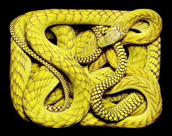 Snake in box