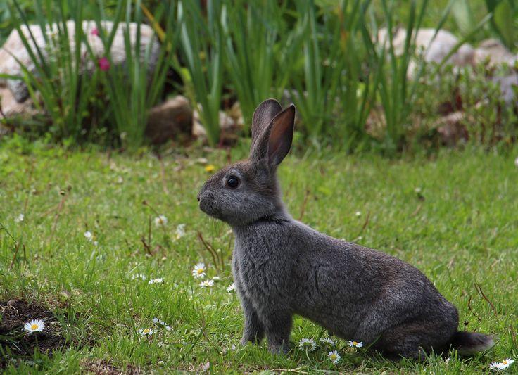 Sie möchten einen Kaninchenstall kaufen? Die besten Ställe im Überblick und viele tolle Tipps für eine artgerechte Haltung finden Sie hier!