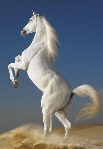 Entonces vi el cielo abierto, y había un caballo blanco. Su jinete se llama fiel y verdadero, y él juzga y hace guerra en justicia.... Y él tiene un nombre escrito en su vestidura y en su muslo: Rey de Reyes y Señor de señores (Apocalipsis 19:11, 16).