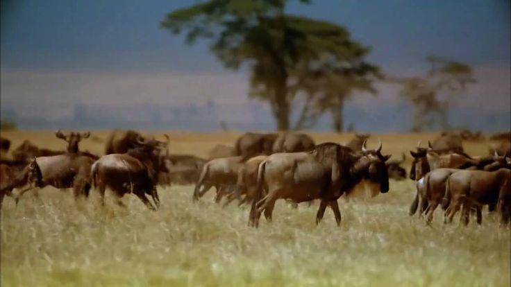 Beautiful World - Africa