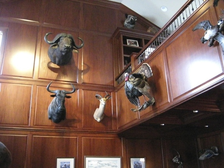 Man Cave Store Coquitlam : 11 best trophy room s images on pinterest rooms hunting