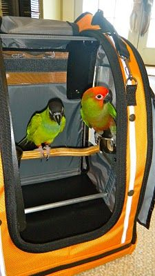 I want this carrier for my Gold Capped Conure.  Kim's birds in this photo.  Her Nanday Conure and Gold Capped Conure.  What a great item!!!