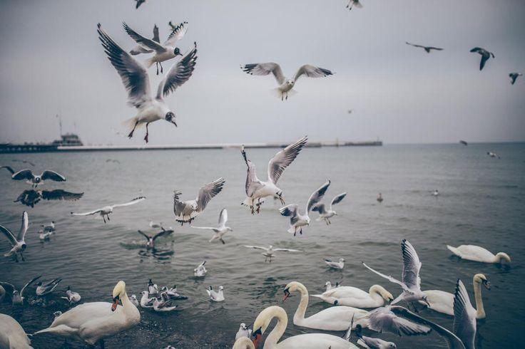 🔍 Get this free picture Pelican Bird Aquatic bird    📷 https://avopix.com/photo/11443-pelican-bird-aquatic-bird    #pelican #bird #aquatic bird #goose #pelecaniform seabird #avopix #free #photos #public #domain