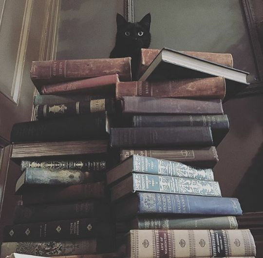 Black Cat and Books. Purrfect. Via @blackveiltattoo on Instagram.