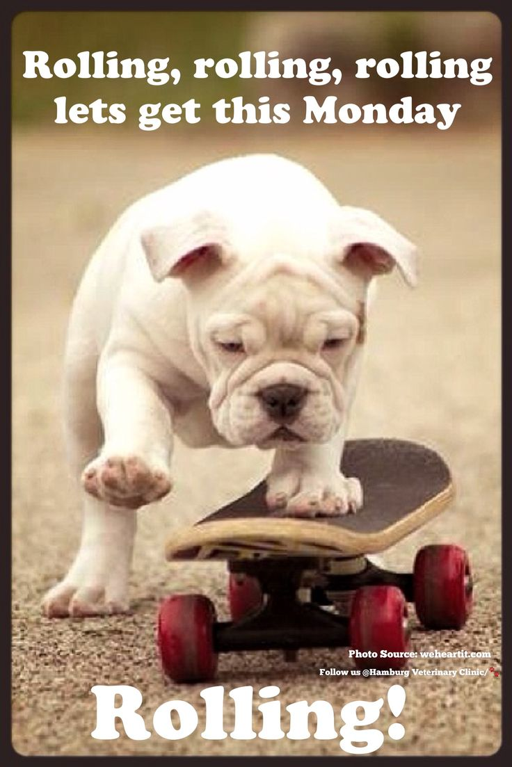 Monday humor | Animal funny | Cute dog | Monday already | New day | New week: Rolling, rolling, rolling lets get this Monday rolling! Wishing you a great day and even better week!: