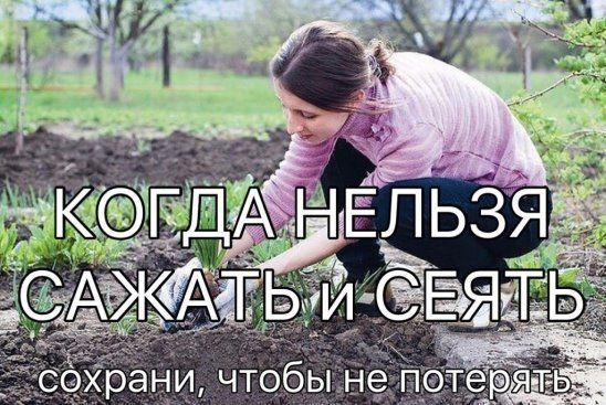 ok.ru