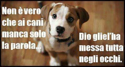 Occhi di cane....dicono tutto!