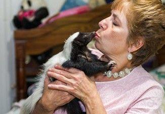 Vive con 50 puzzole in casa: sono fedeli e profumate