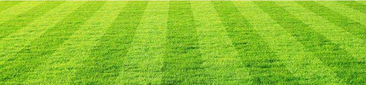Grüner Rasen, Tipps für einen schönen Garten  Schönes Grün im Handumdrehen   Pflegetipps   Ein schöner, gepflegter Rasen gilt als Aushängeschild eines jeden Gartens. Doch gerade jetzt im Frühjahr zeigen sich viele Grünflächen alles andere als attraktiv: Kahle Stellen oder nur spärlicher Graswuchs, versetzt mit Unkraut, weisen deutlich darauf hin, dass es höchste Zeit ist, den Rasen aufzufrischen oder sogar neu anzulegen. Und wer das perfekte Grün ganz rasch haben will, greift zu Fertig- oder…