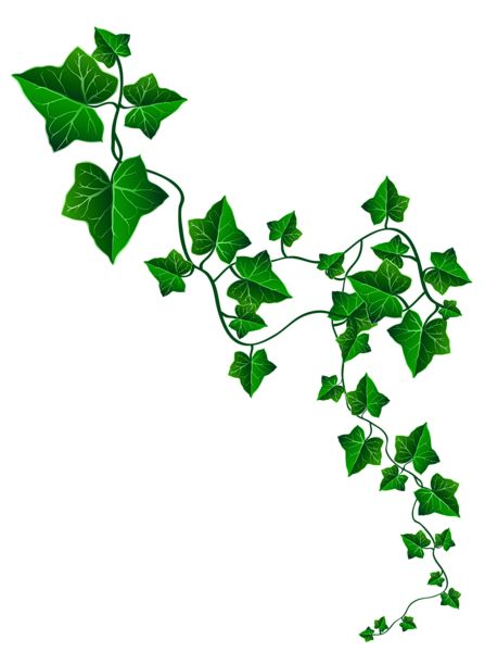 Vine Ivy Decoration PNG Clipart Image