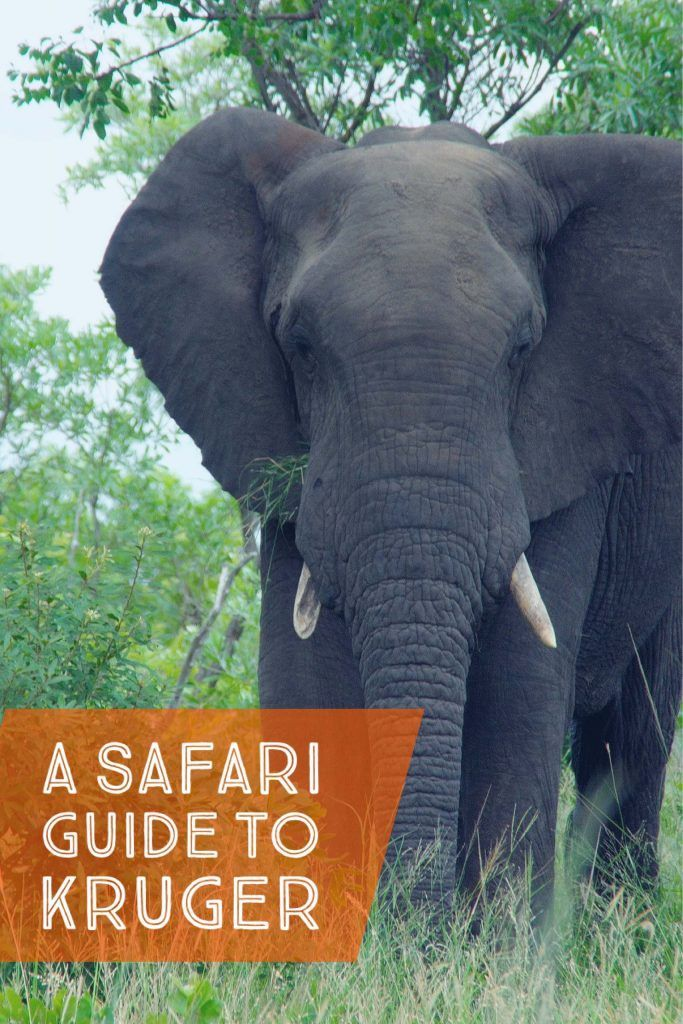 Safari Guide To Kruger National Park in South Africa